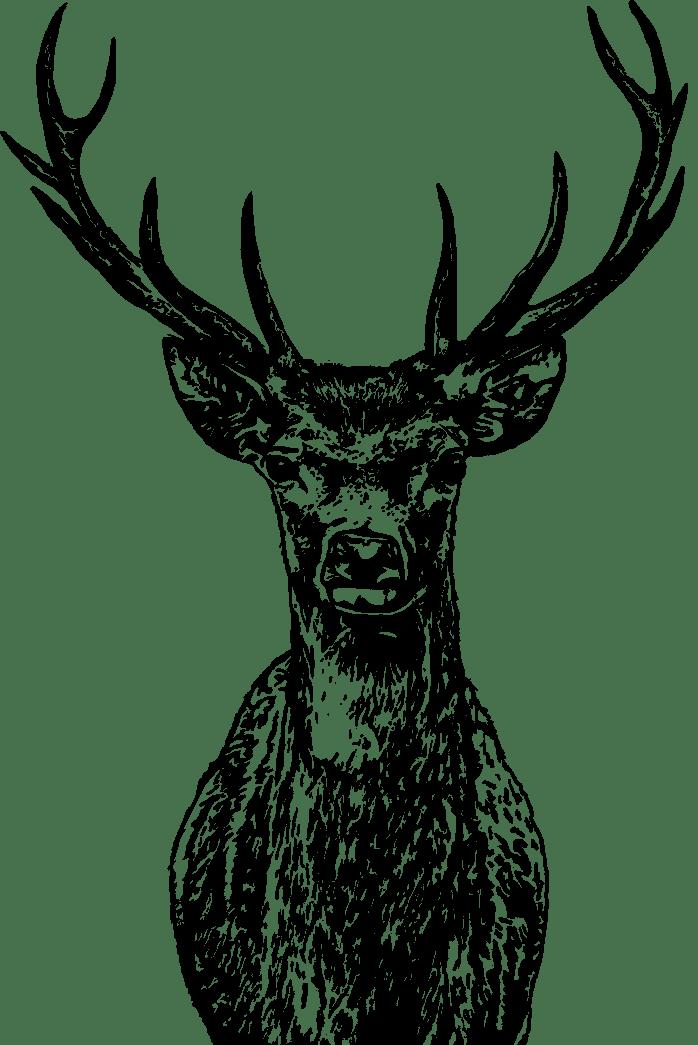 cerf pattern